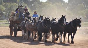 Drought horses Lake Cargelligo