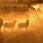 Lachlan Valley Shearing Pty Ltd
